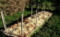 Плюсы и минусы мульчирования опилками почвы в теплице и открытом грунте